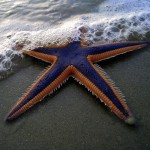 starfishsquare-150x150